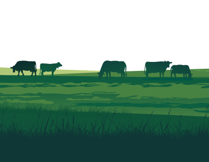 Responsive Website Design for Essex Grazing Project, illustration